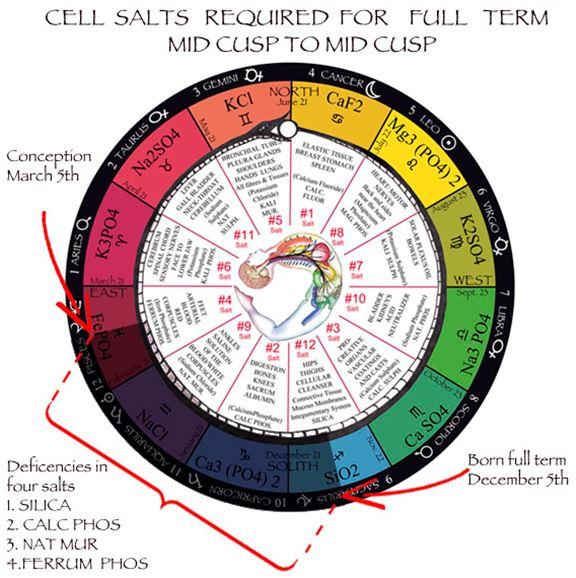 Cell / Tissue Salts | Universal Truth School