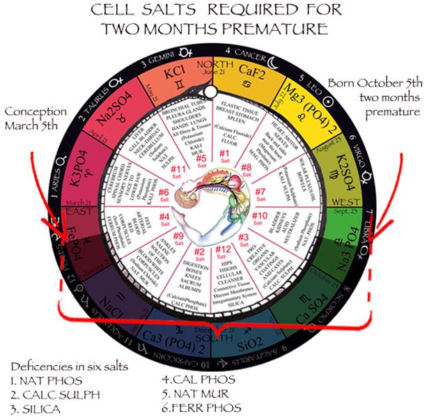 Cell / Tissue Salts | Universal Truth School